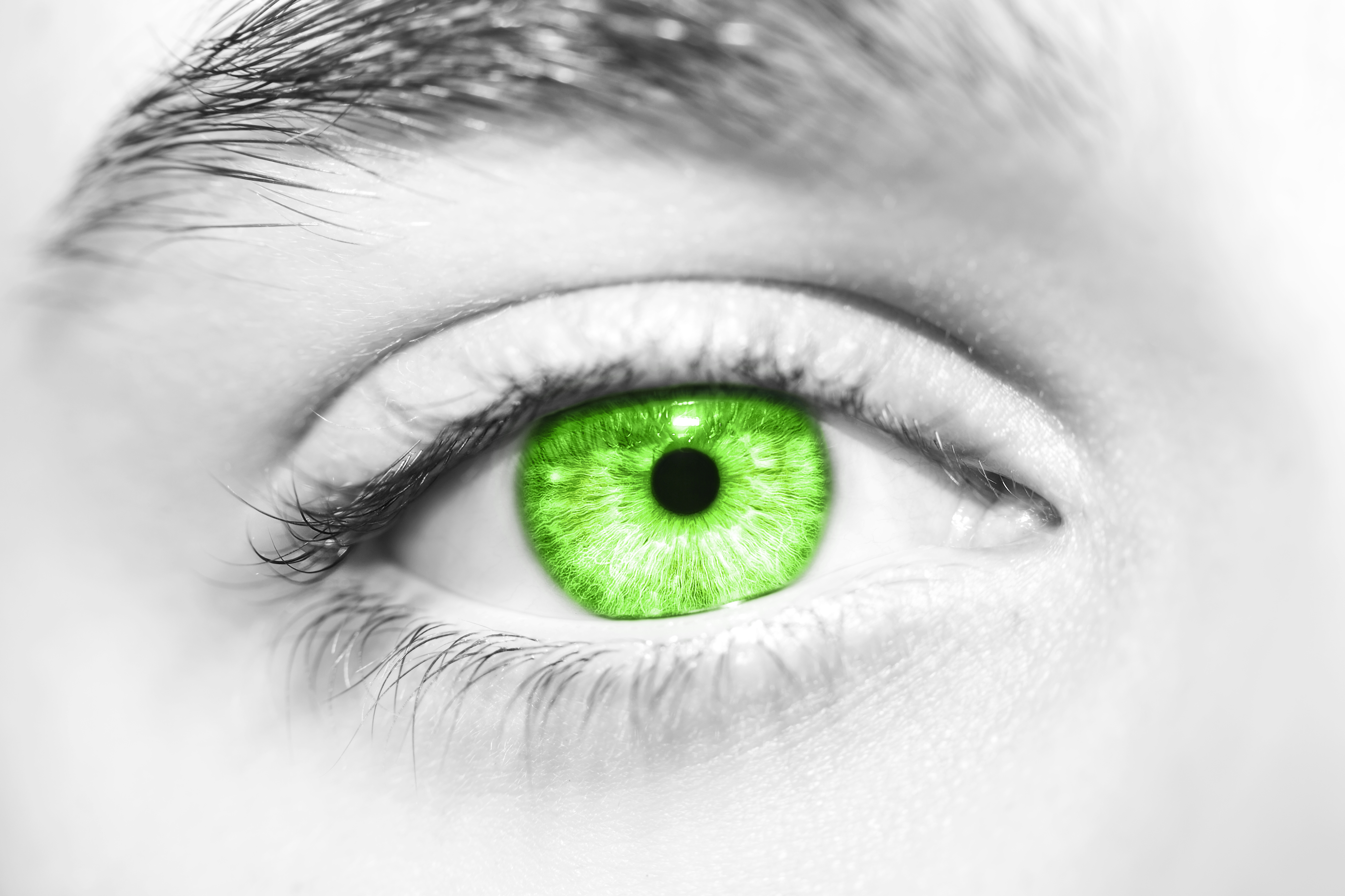 Ocular Pk And Toxicology Studies