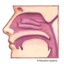 Nasal Tissue Model