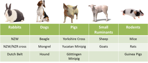 PK Animal Chart