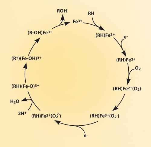 Reactive Metabolites