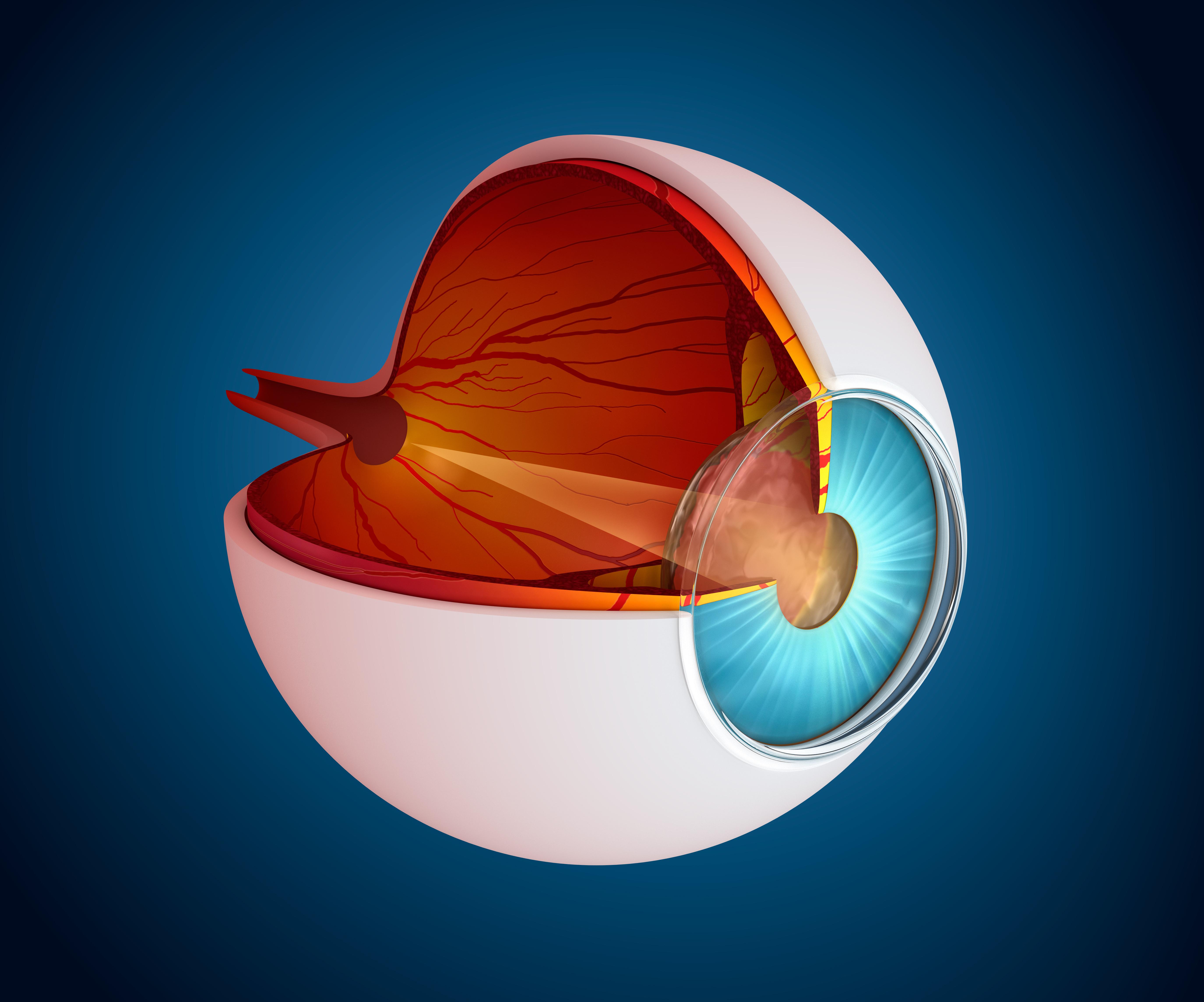 In Vivo Ocular PK