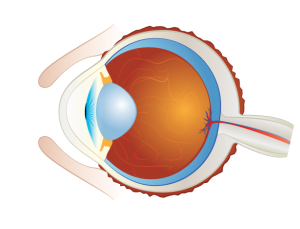 Ocular In Vivo Capabilities