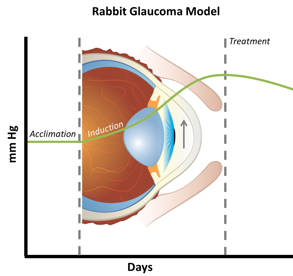 Glaucoma Preclinical Ocular Disease Models