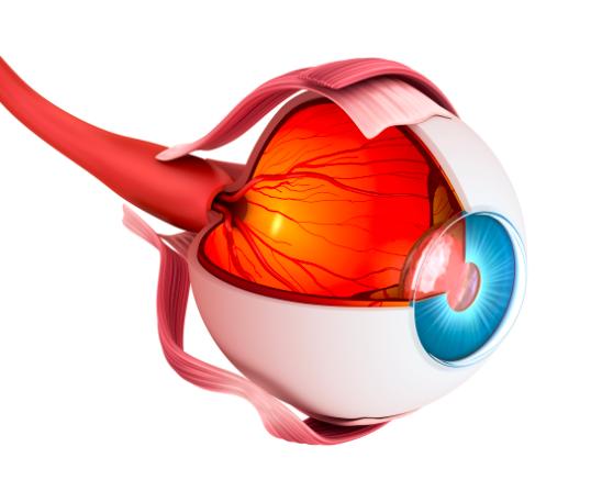 ocular in vivo capabilities