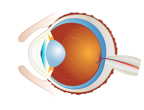 preclinical ophthalmic