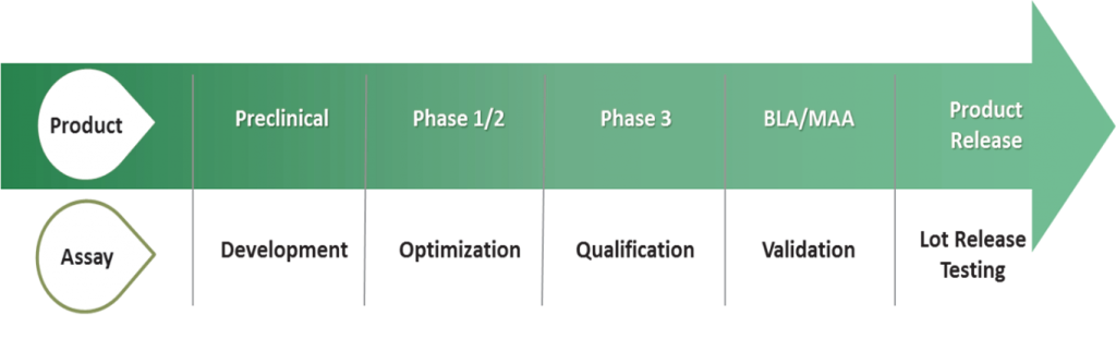 Steps to Potency Assay Validation