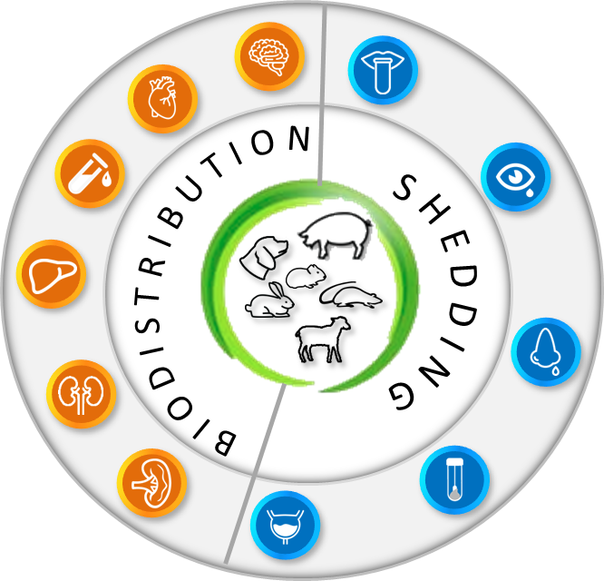 biodistribution and shedding species wheel